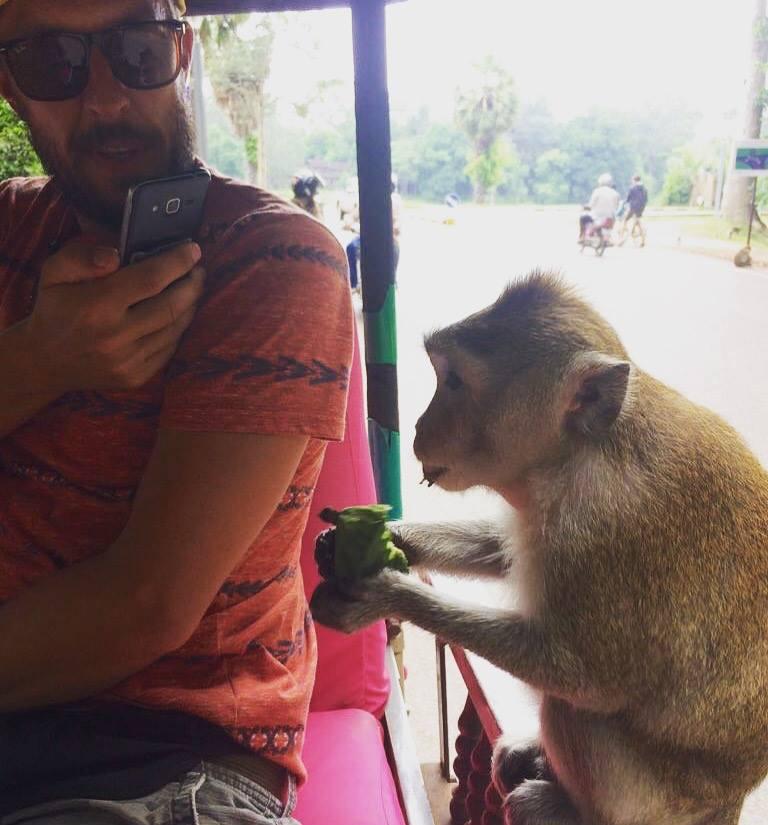 Affenbesuch